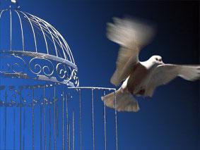 اگر مقصد پرواز است...قفس ویران بهتر